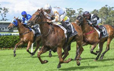 WUDANG BLADE KEEPS SYDNEY STRIKE RATE IN TACT