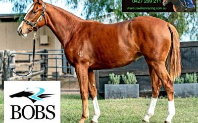 GET INVOLVED NOW – 2YO STAR WITNESS FILLY