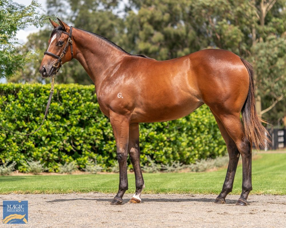 Redoute's Choice X Bubbleberry Filly