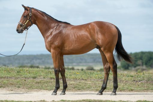 Turffontein X Star Hit 2019 C