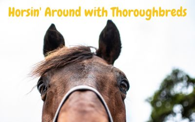 Horse Joint Supplements Guide