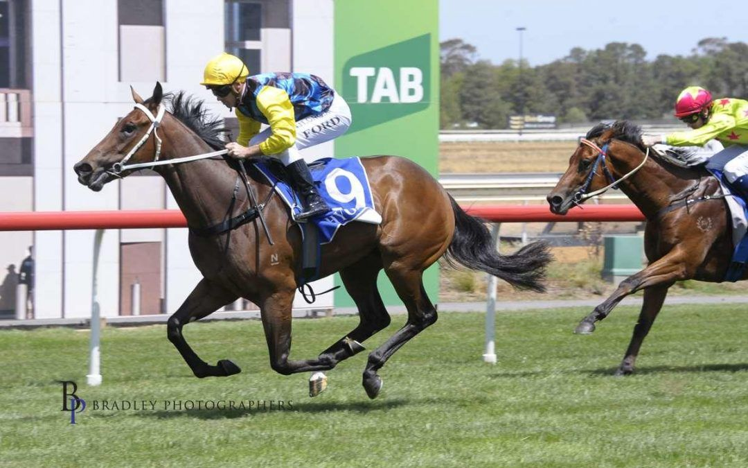 Superbellaa to take on Stakes company