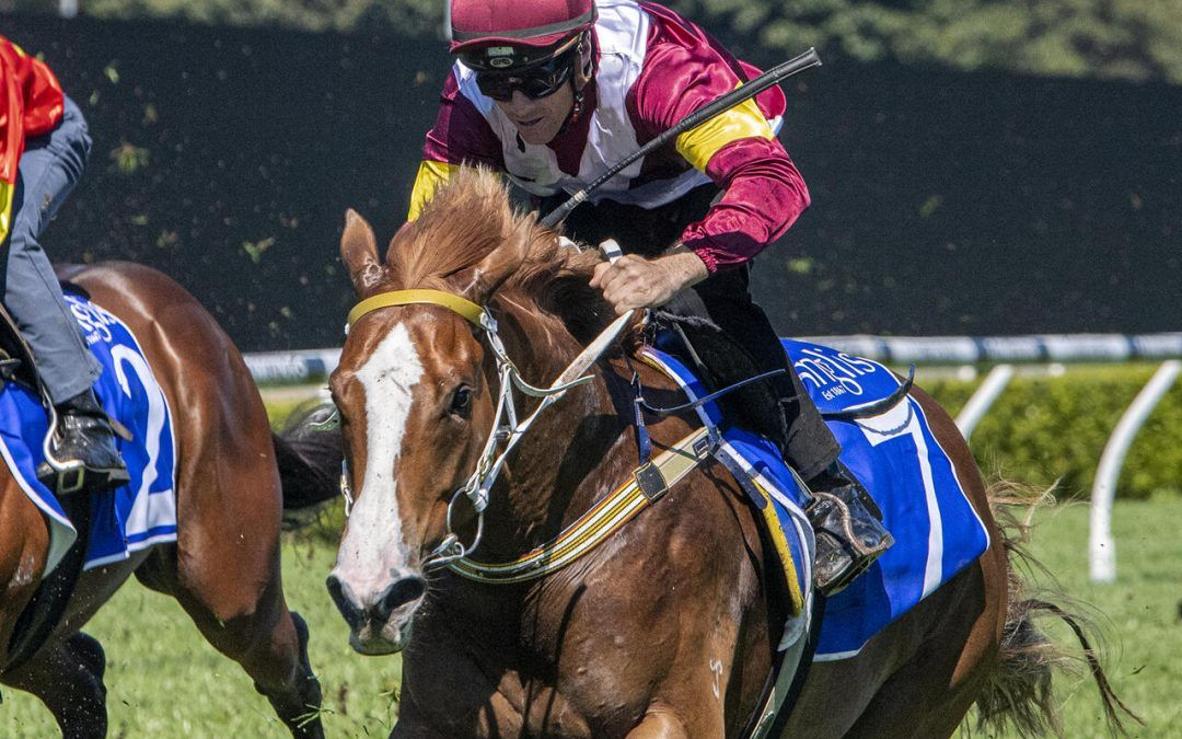 Three babies in Group 3 races for stable this Saturday