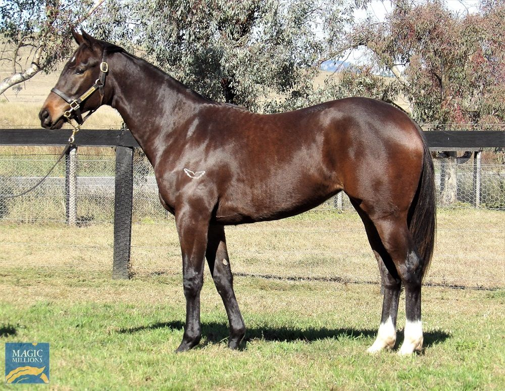 More Than Ready X Miss Saks Filly LEASE