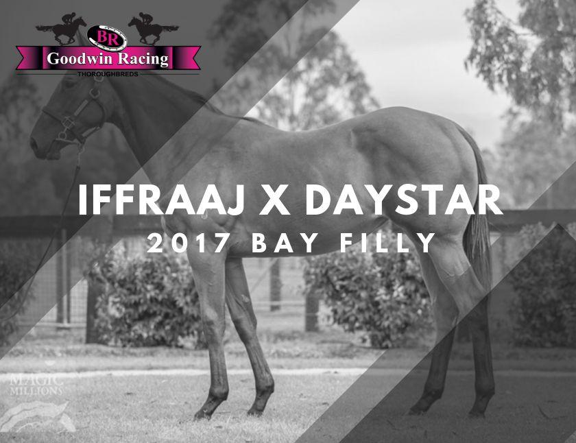 Iffraaj X Daystar
