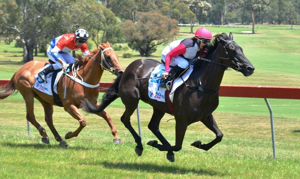 Maiden win a Christmas gift for Molly Dook