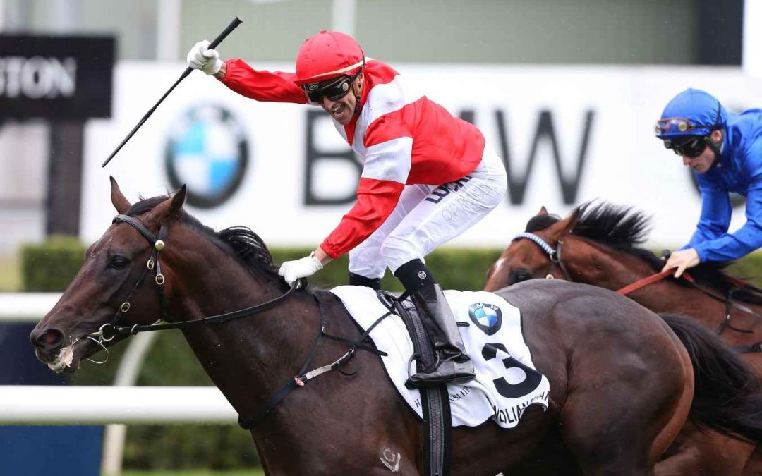Highview's Mongolian Khan draft impress at Karaka