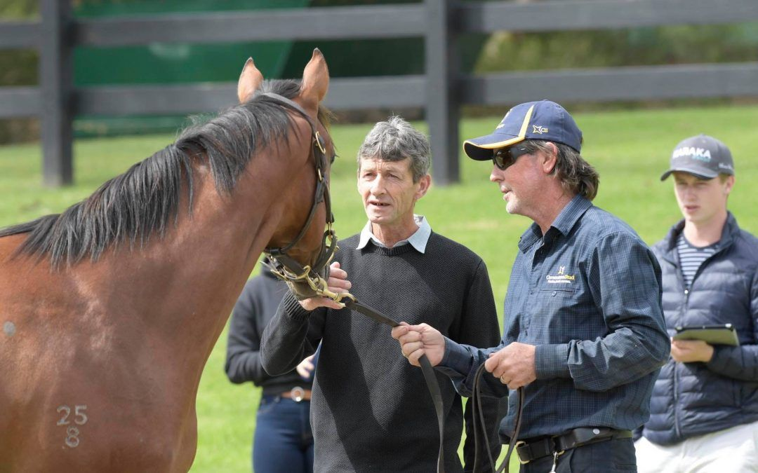 Inglis Premier delivers three quality colts