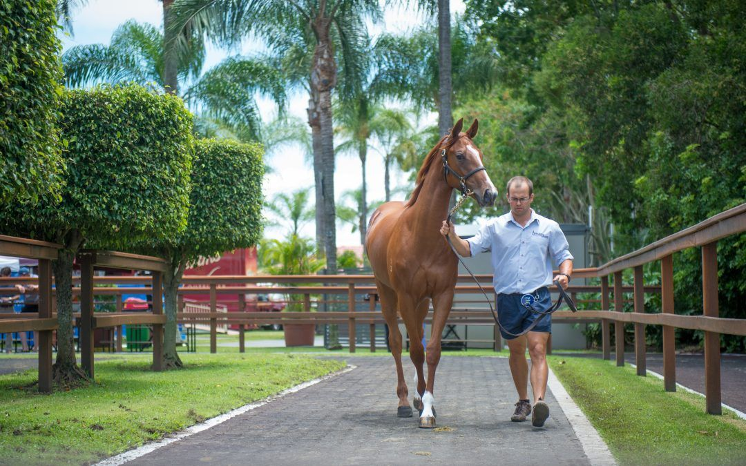 Goodwin Racing bound for Gold Coast Magic Millions