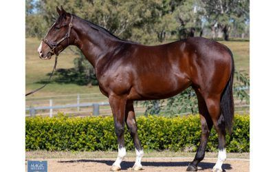 A Dazzling Colt A Boom Purchase for the Krew