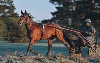 Kilmore: French import Holzarte Vedaquais out to prove he has Group potential